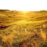 黄金すすき野原