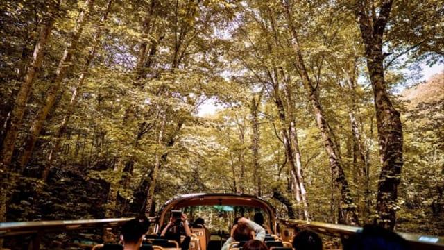 【星野リゾート 界】混雑知らず!オープンエアのスカイバスで日光の紅葉を満