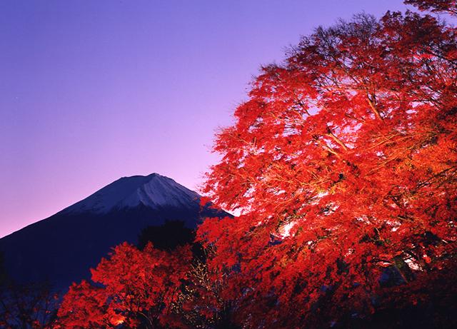 河口湖の紅葉ライトアップと富士山