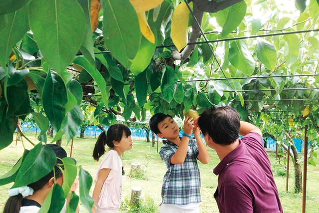 白根大郷中村観光果樹園の梨収穫大家