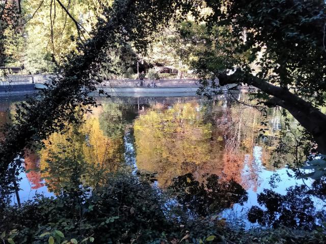 吉祥寺井の頭公園紅葉