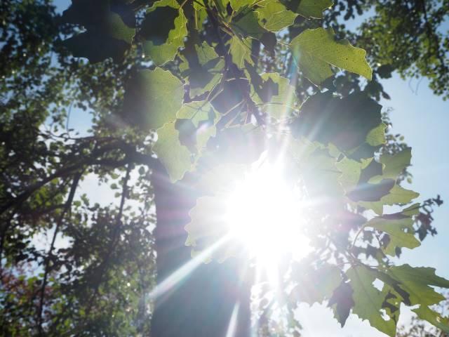 葉っぱ逆光