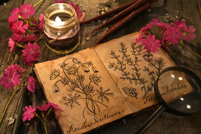 薬草のイメージ