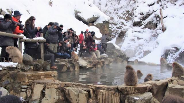 スノーモンキーと観光客