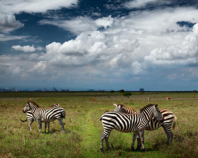 ケニアナイロビ国立公園