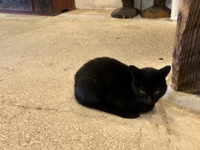 ラムネ温泉 猫