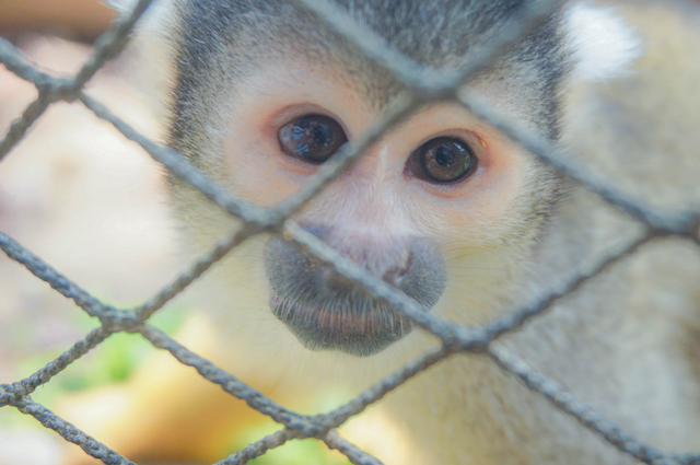 福岡県福岡市海の中道海浜公園 動物の森