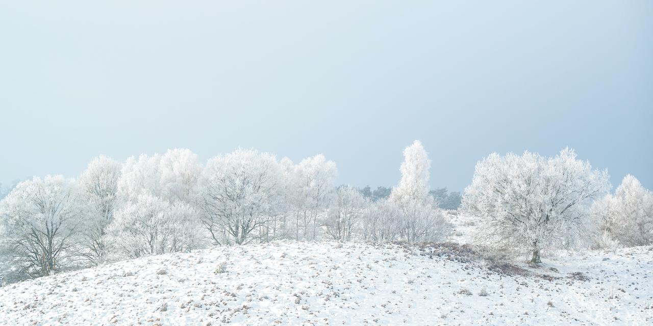 オランダ・フェルウェズーム国立公園