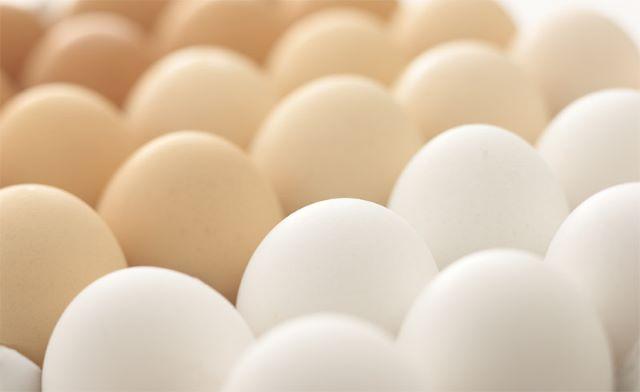 三木鶏卵 卵