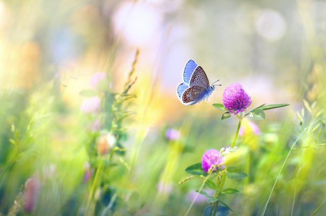 春の花と虫