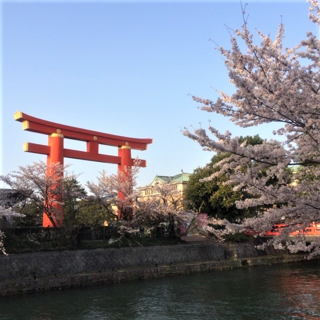平安神宮大鳥居と桜