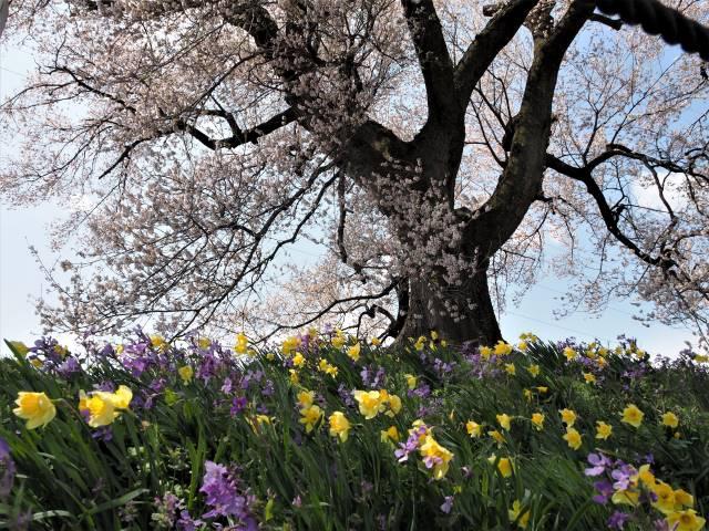根元の花々