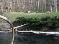 糠平温泉中村屋 露天風呂と蝦夷鹿
