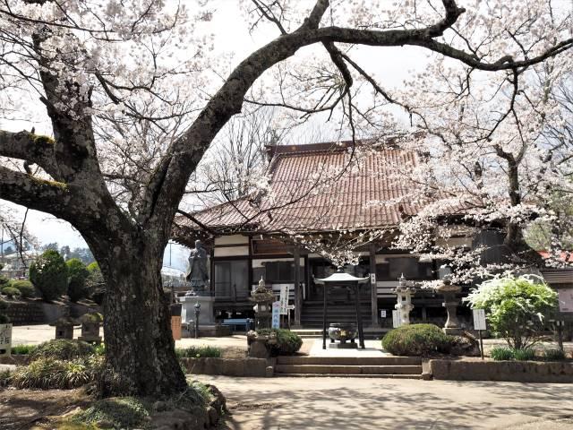 桜越し本堂