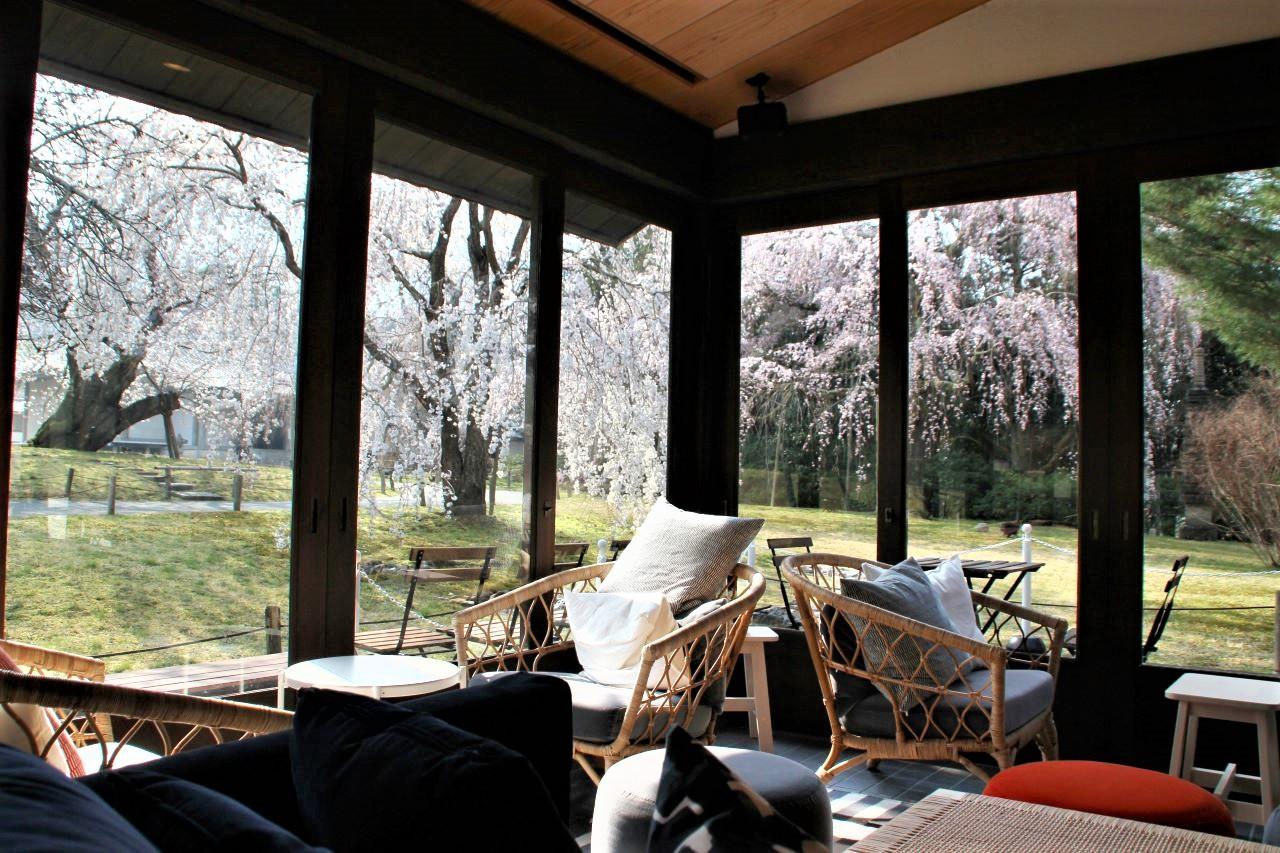 ル・クロ スゥ ル スリジェ 店内から見る桜