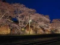 JR舞木駅の桜並木