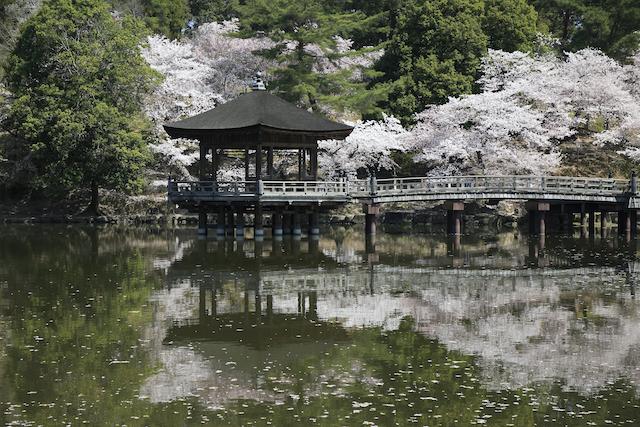 奈良県奈良市奈良公園