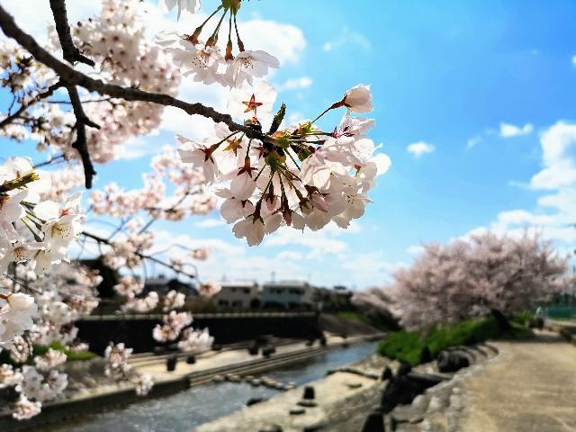 奈良県奈良市「佐保川の桜並木」川縁の近く