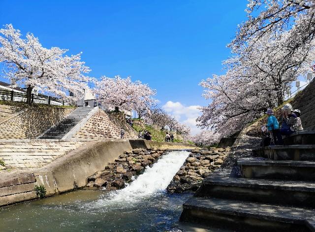 奈良県奈良市「佐保川の桜並木」川縁の憩いの広場