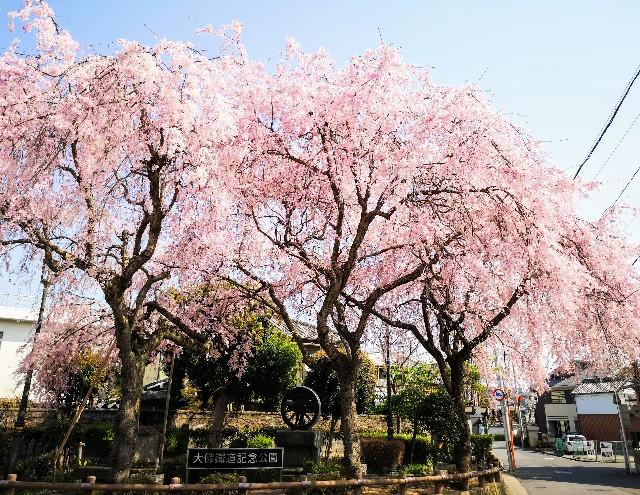 奈良県奈良市「大仏鉄道記念公園」枝垂桜