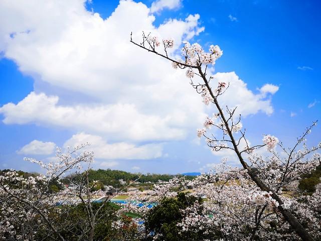 奈良県奈良市「鴻ノ池運動公園」高台からの眺め