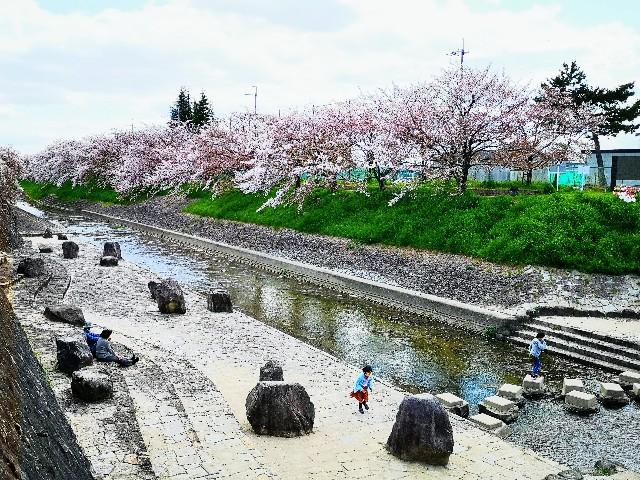 奈良県奈良市「佐保川の桜並木」川縁の遊び場