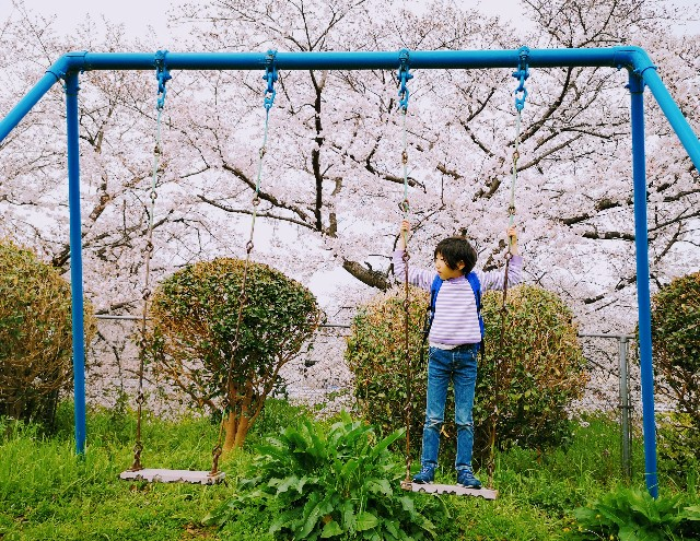 奈良県奈良市「佐保川の桜並木」恋の窪周辺の公園