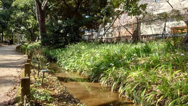 玉川上水復元
