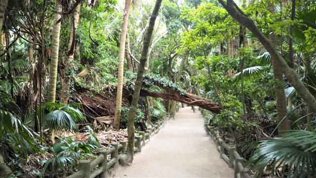 熱帯性の樹木