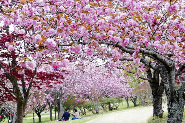 茨城県那珂市静峰ふるさと公園