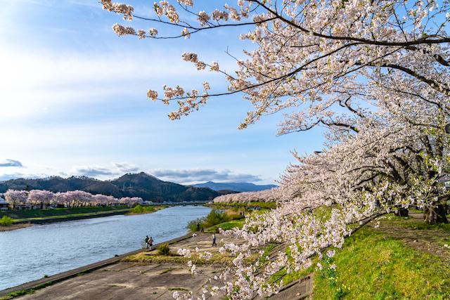 秋田県仙北市桧木内川堤
