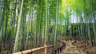 奈良県「瑜伽山園地 旧山口氏南都別邸庭園」竹林