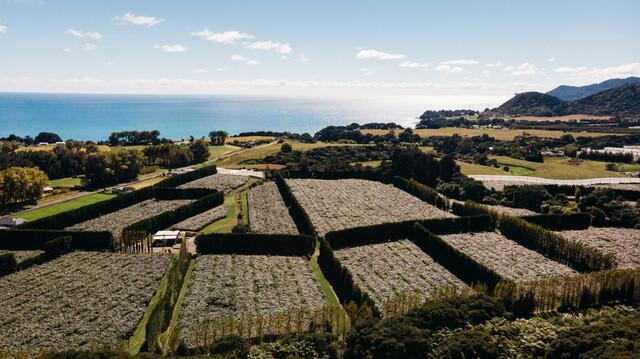 ニュージーランドのキウイフルーツ農園