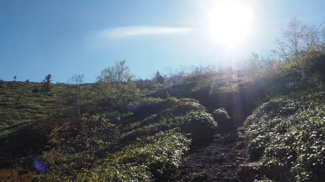 登山道と日差し
