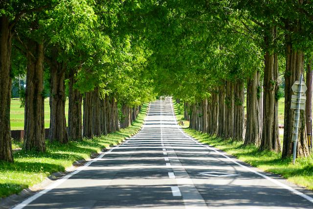 滋賀県高島市メタセコイア並木1