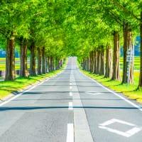 滋賀県高島市メタセコイア並木2