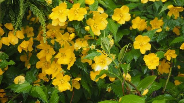 花の名前不明