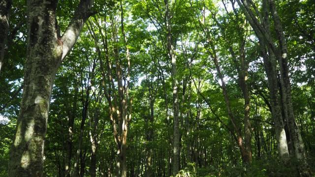 登山道の木立