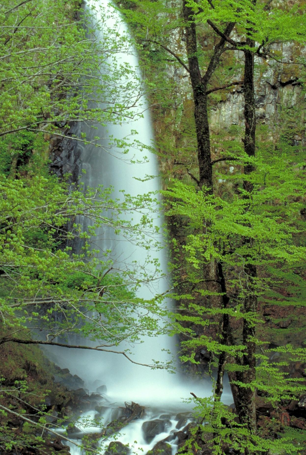 雨滝(鳥取県)