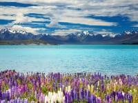 ニュージーランド・テカポ湖2