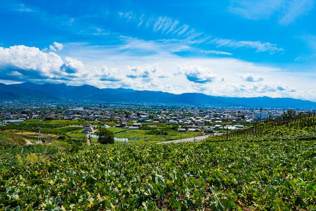 山梨県日本遺産のぶどう畑