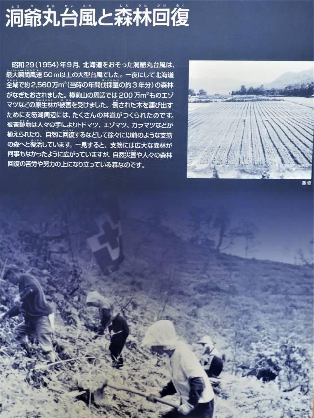 洞爺丸台風の記事