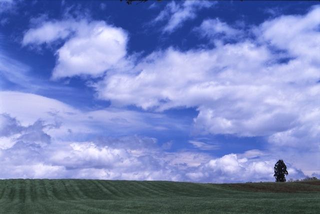 栃木県 牧草地1 (那須町大島地区)