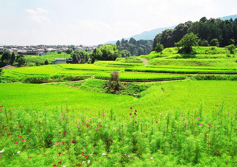 滋賀県 棚田(仰木町)