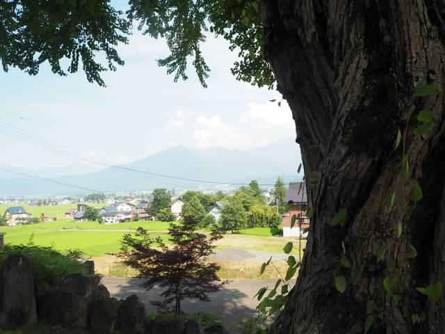 木越しの巻機山