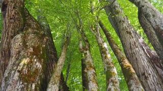 見上げる木