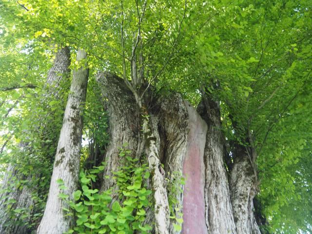 鬱蒼とした枝葉