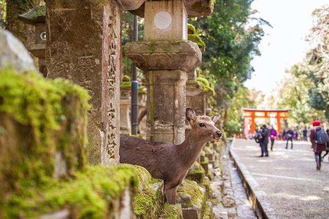 奈良県奈良市春日大社