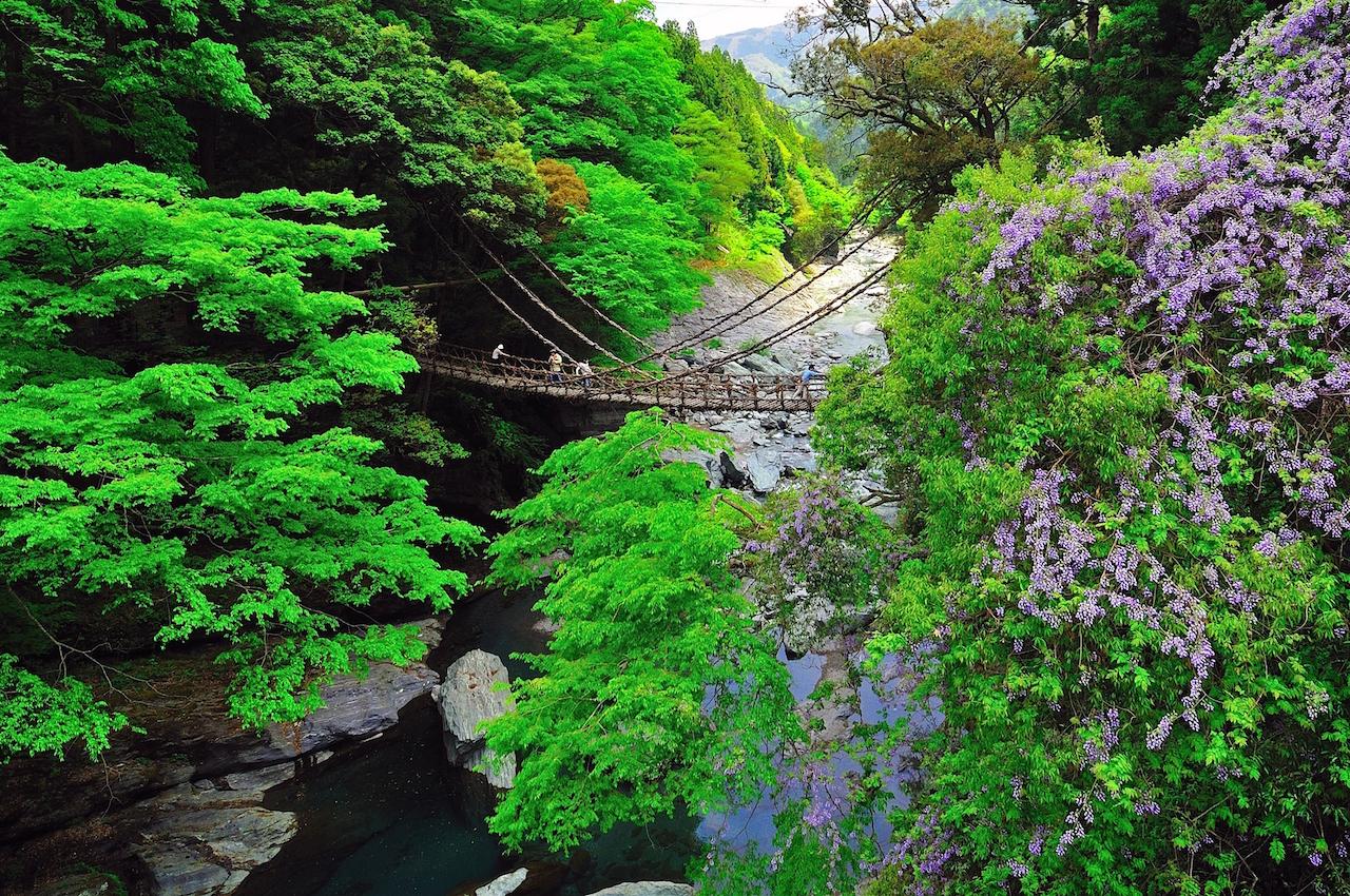 徳島県 祖谷のかずら橋