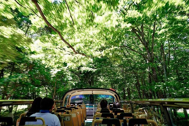 奥入瀬渓流バスツアー